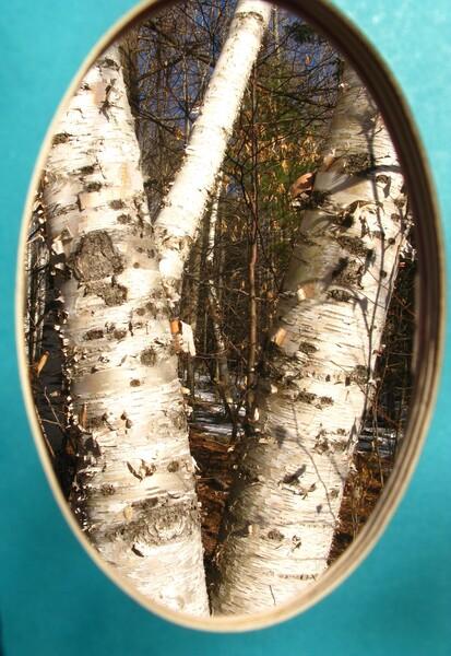 birch blue by Brett Noel
