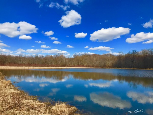 Pond Reflections by Brian Camilleri Photography