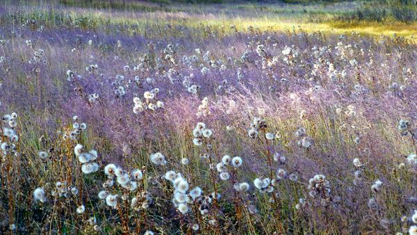 Dream Field by Brian Shaw