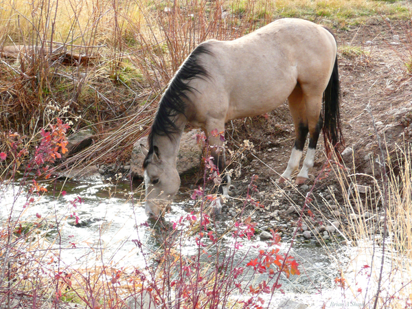 Horse Drink by Brian Shaw