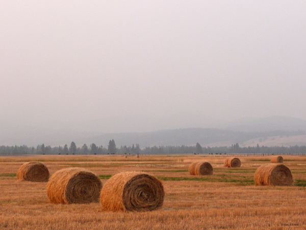 Haybales in a Haze by Brian Shaw