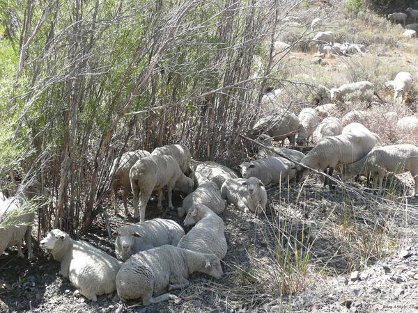 Sheep Huddle by Brian Shaw