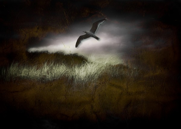 Seagull in Dark Landscape by Bruce Rolff