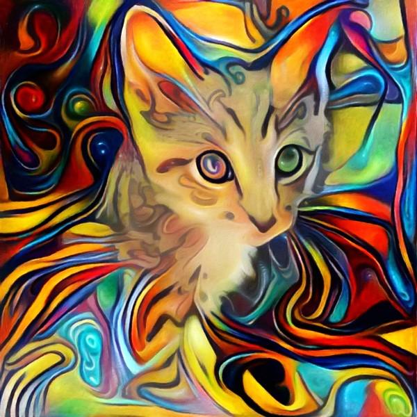 Kitten by Bruce Rolff