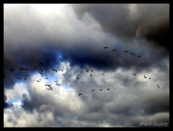 Fleeing The Rain Clouds by Bruce Swartz
