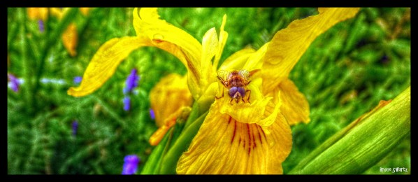 Hey Bee Floral HDR by Bruce Swartz