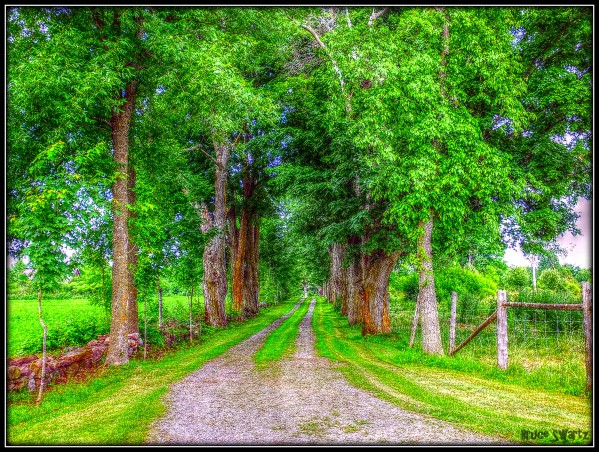 100 Year Old Trees & Path HDR by Bruce Swartz