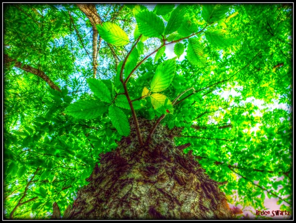 The Tree Of Life HDR by Bruce Swartz