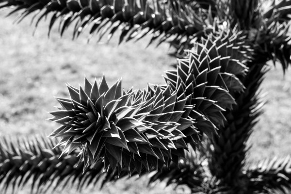 Plant Image BW by Bunnoffee Photography