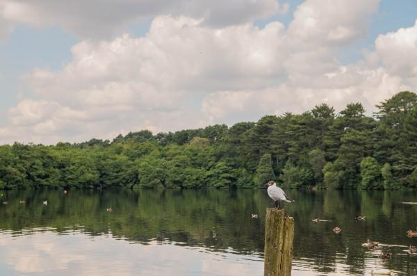 Observant Bird by Bunnoffee Photography