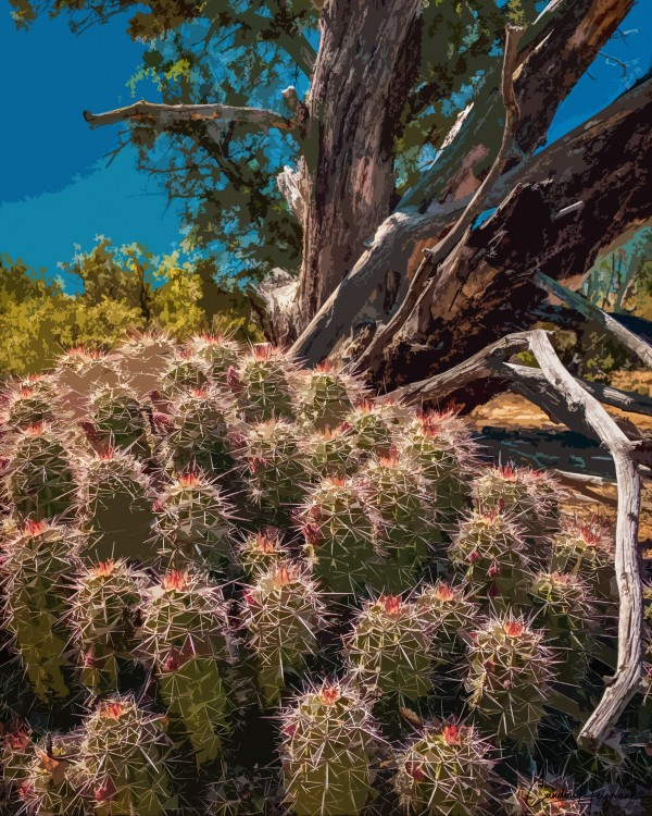 Cactus and tree poster by By the C Media
