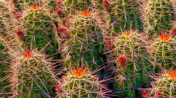 Cacti by By the C Media