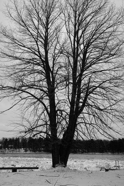 L'arbre de vie by CEDANSBOITE