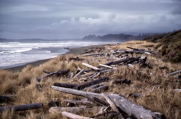 Beached Driftlogs Digital Download
