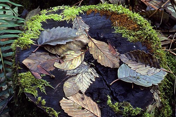 Mossy Stump Digital Download