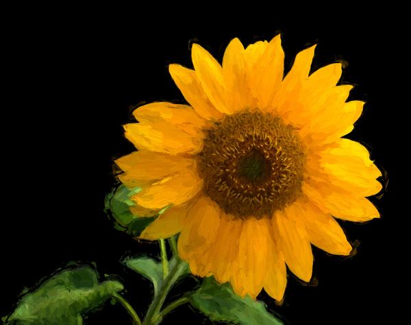 Solitary Sunflower Digital Download