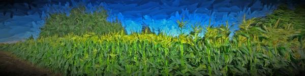 Summer Corn Digital Download