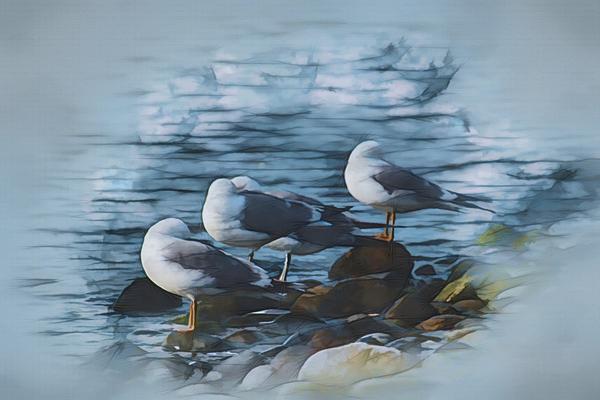 Preening Gulls Digital Download