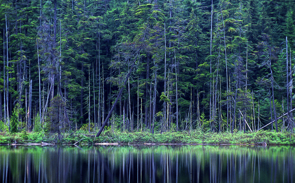 Forest by the Lake Digital Download