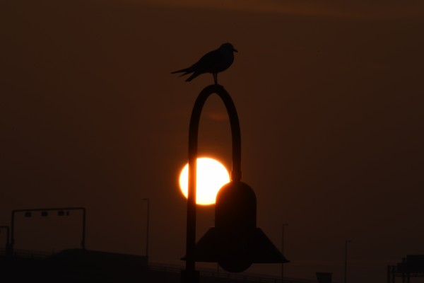 Seagull on a Lamp Post by Cameraman Klein