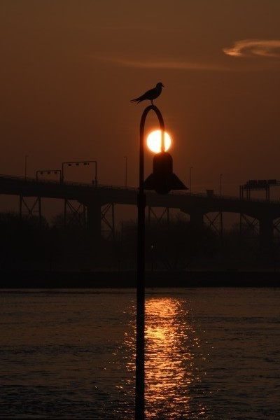 Seagull and the Sun by Cameraman Klein