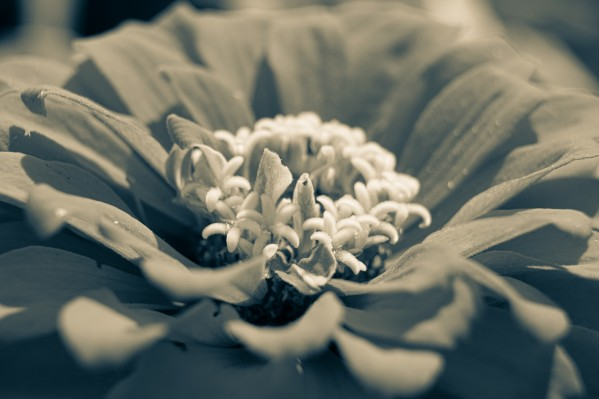 Nature 10 by Cameraman Klein