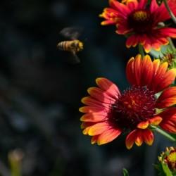 Nature 31 by Cameraman Klein