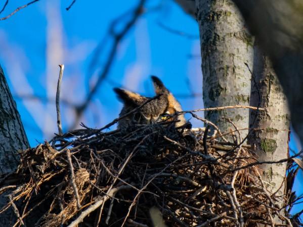 Owl 2 by Cameraman Klein