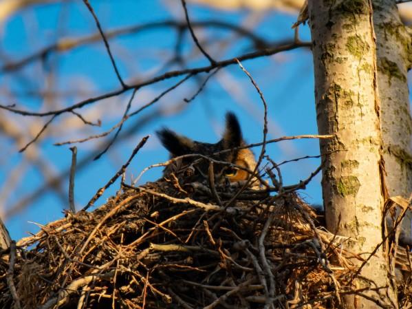 Owl 4 by Cameraman Klein