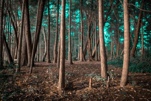 EnchantedForest by Cameron Grey