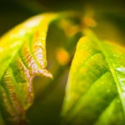 Earth Lungs - Poumons de la Terre by Carole Ledoux Photography