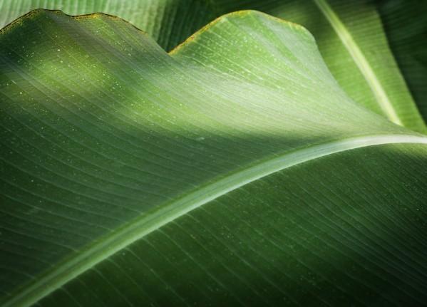 The Green Curve - La Courbe Verte by Carole Ledoux Photography