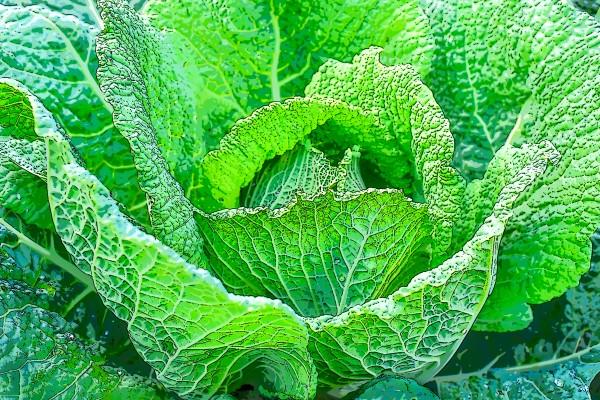 Harvest- La Recolte by Carole Ledoux Photography