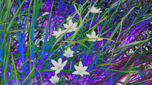 blueeweeds Canvas Print