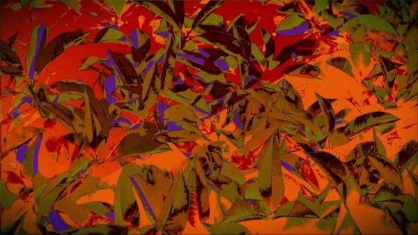 bushesabstract Canvas Print