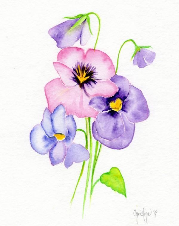 Pansy by Christine Cholowsky