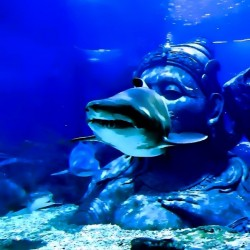 Round Aquarium by Clement Tsang