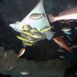 Devil Fish by Clement Tsang