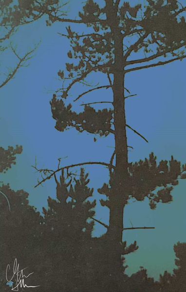 Monterey Cypress by Clint Hubler