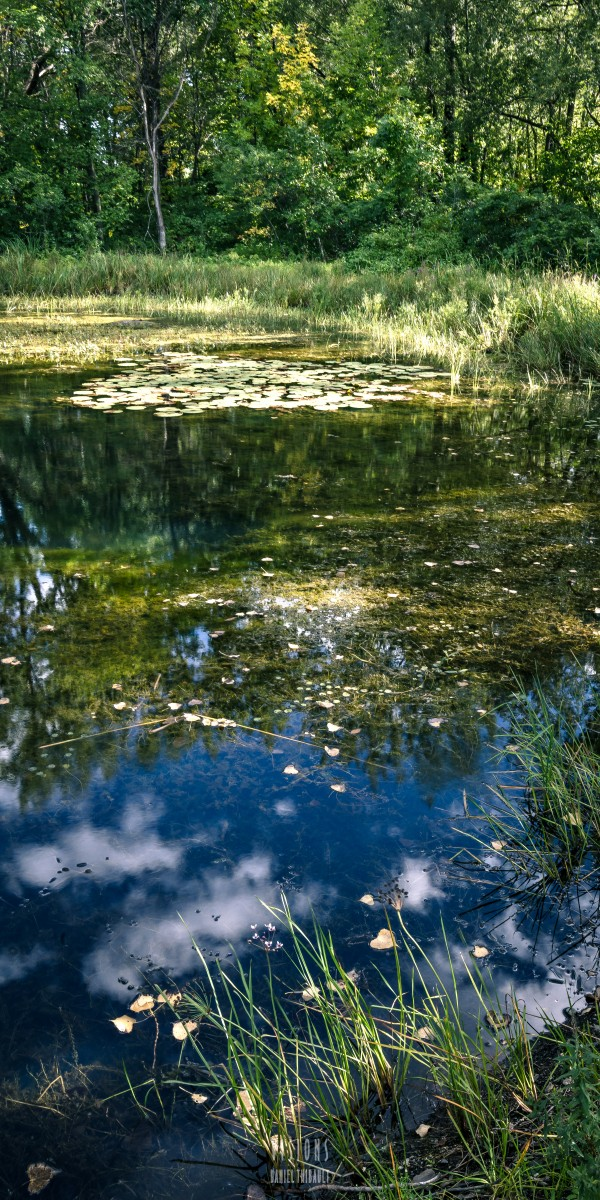 Monet style 2 by Daniel Thibault artiste-photographe