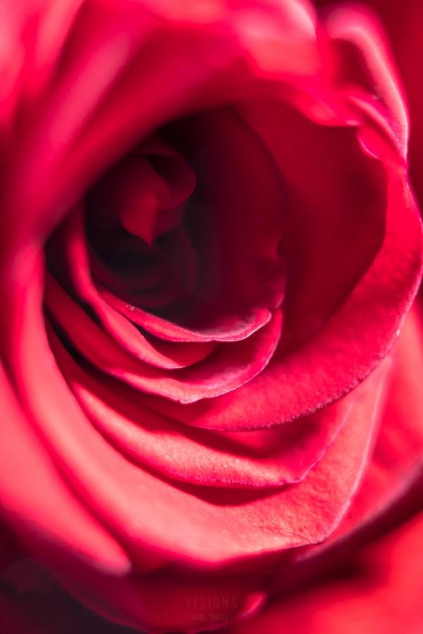 Red 2 by Daniel Thibault artiste-photographe