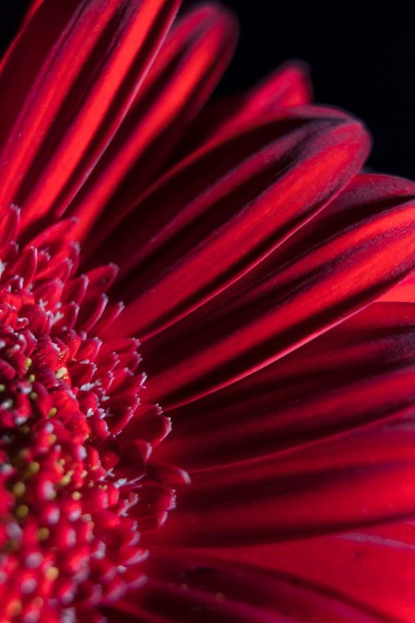 Red 3 by Daniel Thibault artiste-photographe