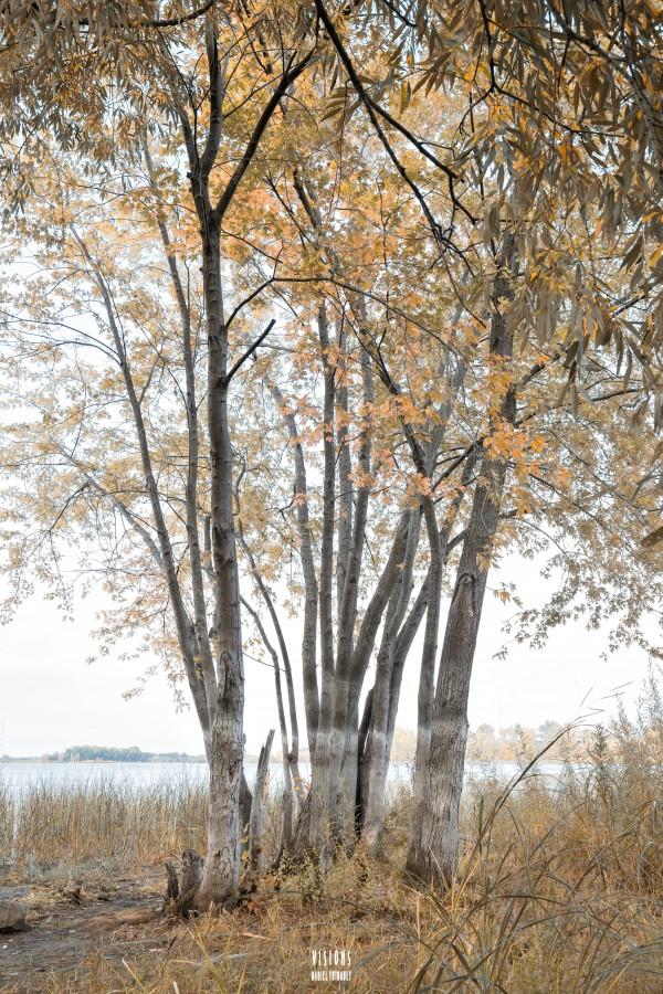 Lumiere automnale 2 by Daniel Thibault artiste-photographe