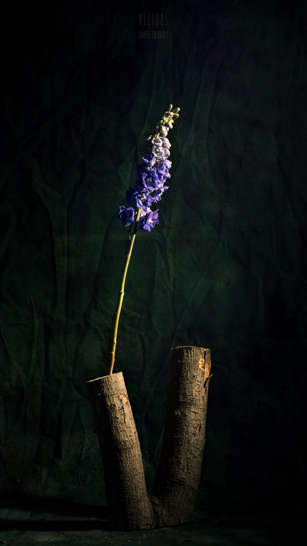Simplicitude by Daniel Thibault artiste-photographe
