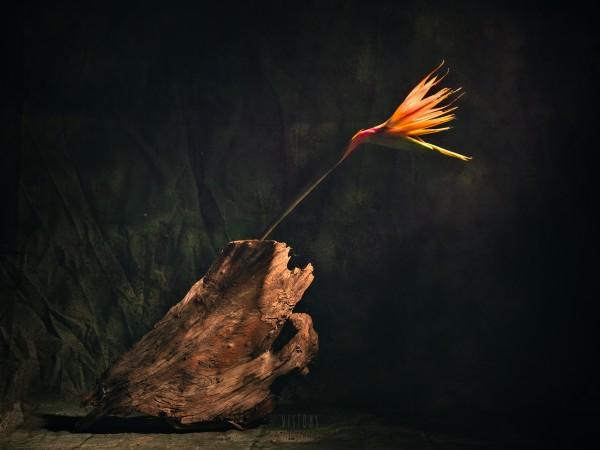 A vol doiseau by Daniel Thibault artiste-photographe