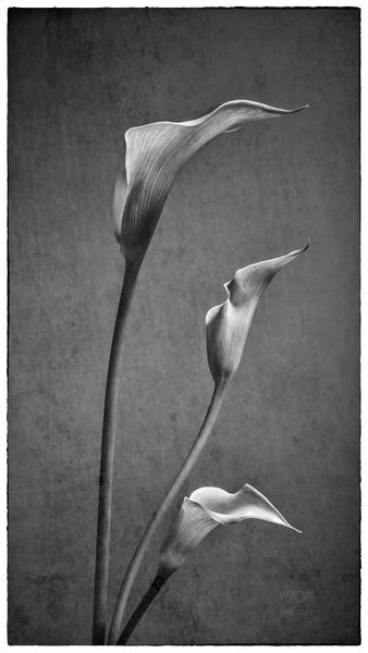 Etude Zen 8 c by Daniel Thibault artiste-photographe