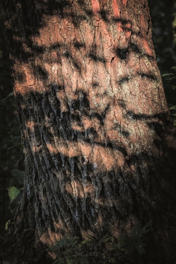À la poursuite de la lumière et de lombre by Daniel Thibault artiste-photographe