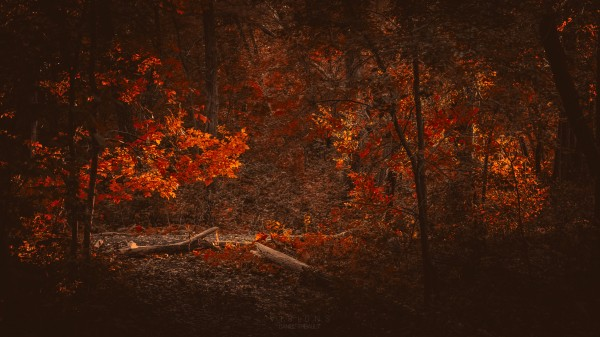 Somewhere in fall by Daniel Thibault artiste-photographe