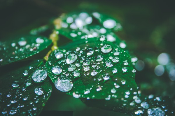 Raindrops on leaves by Danielle Farrell