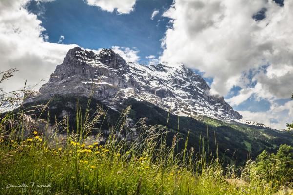 Mountain View by Danielle Farrell